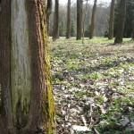 Erdőbénye